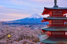 樱花盛放的季节鸦    听说新仓山浅间公园是观赏富士山的最佳位置,还有很多明信片的经典位置就在这里。