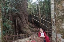 在海南昌江王岭,我们就这样与树王、树神约会了,它们就在那里等了2000年,2600年,只为了与我们某
