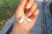 这朵无名的小花像不像蝴蝶?