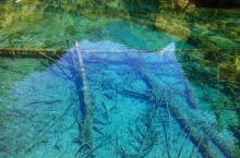 """九寨沟主沟呈""""Y""""字形,总长50余千米。沟中分布有多处湖泊、瀑布群和钙化滩流等。原始森林覆盖了九寨沟"""