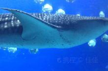 珠海长隆海洋王国,看鲸鲨,小宝贝的最爱~~~