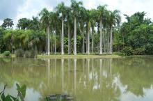 """西双版纳植物园,美丽的热带雨林,各种植物让眼睛应接不暇!图4为铁树,图5叫""""鸡蛋花""""! 西双版纳有近"""