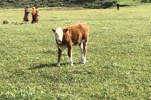 美丽的大草原,可以骑马,射箭,体验一下策马奔腾共享人世繁华的感觉