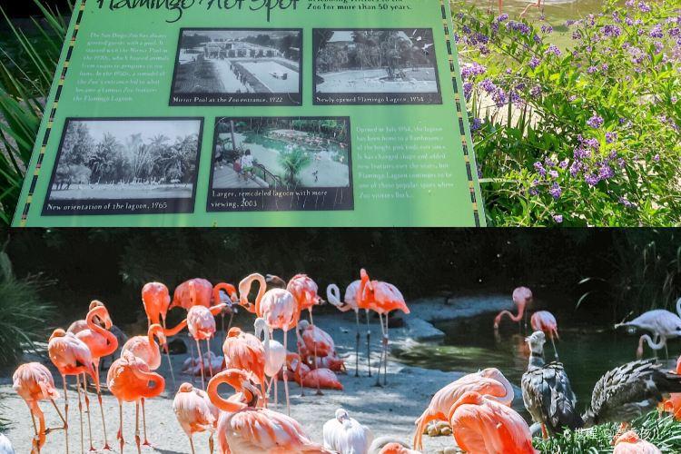 聖地亞哥動物園3