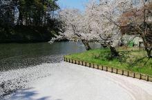 北海道樱花季值得一游