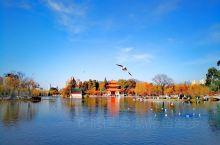 昆明大观楼是来到昆明旅游必去的公园。有风景,有历史,有文化,有意思。 大观楼公园得水体联通着滇池草海