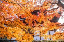 之前去了各种 京都 赏枫名所,著名和小众的都有,但是 京都 第一的赏枫胜地只有一个——东福寺。 东福
