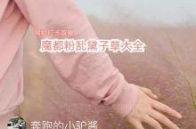 粉红色的约会,你会来吗?  打卡今年份的粉乱黛子草。粉红的团雾开始弥漫在魔都的大街小巷。温柔的姿态,