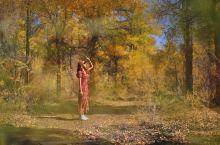 秋天是最温柔的季节——胡杨是她的代名词 最美季节 落叶知秋,一夜进入金色的童话世界。秋天是最温柔最浪