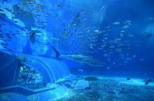 冲绳,美丽海水族馆,感觉室内馆其实没有上海的水族馆大,但是室外很大,有海豚表演,风景特别美~建议去之