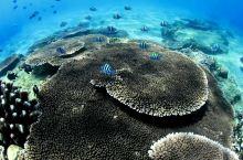 奇妙的海底世界,欢乐畅游的鱼儿。这个秋天来分界洲岛,潜入海底与小鱼们约个会吧!
