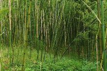莫干山风景名胜区位于浙江省湖州市德清县,属天目山余脉,主峰塔山海拔758米。以竹、泉、云和清、绿、凉