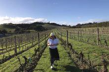 在新西兰的葡萄种植基地游~~