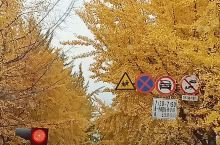 金色的秋天,给我们带来收获!