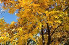 五彩缤纷的秋