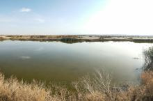 大黄泥滩也有绿洲。