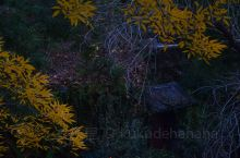 秋末冬初的大明湖畔,下午4点多来湖边闲逛,寻找最后的秋色,随着太阳的落下,白天所见之景色又以另一种方