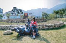 瑞安第一个最美乡村在曹村不花钱的旅游景点。 浙江温州瑞安有一个非常容易被人们忽略的小村,曹村,沿着1