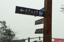 初冬老君山-雪中游老君山2:(24号)经过两个多小时的艰难跋涉,上午10时许登上海拔2217米的伏牛