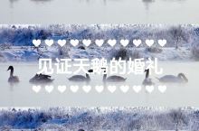 京城周边冬季好去处 | 天鹅教会我们的夫妻之道  你知道吗?天鹅也有浪漫的婚礼!  天鹅多是一夫一妻