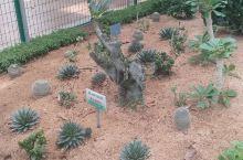 寿光植物园