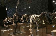 恐龙开会。