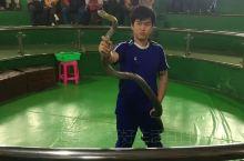 泰国皇家毒蛇研究中心以研究毒蛇著称。表演区看到随意手抓毒蛇,我们觉得可怕,但表演者却显得格外轻松。