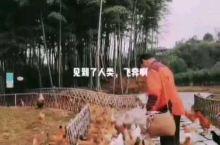 长兴开元芳草地乡村酒店  到最安全的乡村,抓抓了一只走地鸡,一只乌骨鸡。然后在生态农场采了很多当季蔬