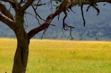 塞伦盖蒂大草原