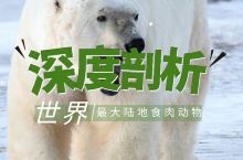 「深度剖析|世界最大陆地食肉动物」  北极熊:世界上最大的陆地食肉动物  资料卡片: 【身高】:成年