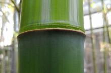 #花式过五一 过五一还有一个选择,去竹海看竹领悟 高风亮节说的就是竹子 细细品,有的解了,有的化了,