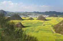这里,云南罗平,金鸡峰从 应该是中国最美的油菜花田之一了。 满山遍野的油菜花盛开在喀斯特地貌的原野里