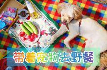 北京周边自驾攻略 带狗子郊游好去处  意外发现北京昌平一处无名郊野公园,野餐,可带,可搭帐篷,关键是
