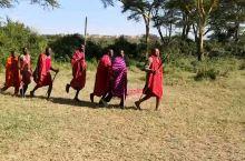 #马赛欢送歌舞#和非洲大草原完全融为一体的,最美最和谐的还是他们马赛人。