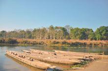 奇特旺国家公园 这个很大的原始森林公园 坐小木舟穿梭进去至丛林漫步 一路上各种动物风景 也不伐惊险刺