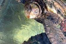 下田海底水族館在下田温泉地♨️那里,已经建成有好多年了,我90年代初就来玩过,现在还是老样子,没有改
