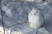 哈利波特魔法学校的白色猫头鹰