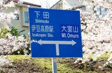 日本伊豆高原的樱並木街道,在每年的3月中旬到4月中旬的近一个月时间,长几公里的街道两边全部是盛放的吉
