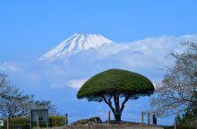 古城遗迹不怎么好玩,唯一的景色还是眺望富士山……