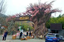 春节游玩!!!!桃花谷,竹林关古镇,丹凤县城夜景
