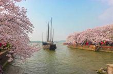 春日实时播报:  这两天无锡太湖鼋头渚风景区名满中外的赏樱大名果然名不虛传,现在正在满开期间,美轮美