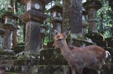 【奈良】 从 京都 出发,近铁大约一个小时的车程,经过了村庄和田野,到达了奈良。 出站之后跟着指示牌