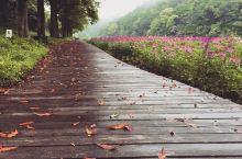 广东竟然有这样一个神仙地方  【中国的小荷兰】蜿蜒的小路,盛开的鲜花,沿着区域,分别是橙色的、紫色的