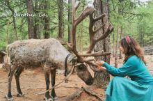 """与林间精灵-驯鹿对话  根河北部的敖鲁古雅河畔是鄂温克部落的聚居地,当地语言里是""""杨树林茂盛的地方"""""""