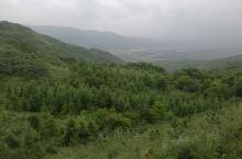 泾源县龙头岭沿途风景。放松心情的好地方。