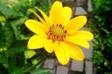 黄。This yellow is simply and  absolutely beautiful.