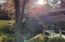 秋天去日本真的很美,箱根的枫叶,各种各样的公园,东京迪斯尼,一一打卡