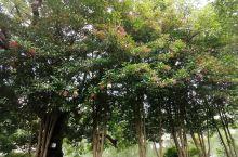 台州临海东湖公园