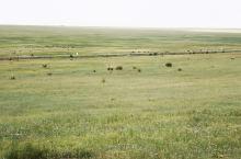 大草原,蒙古汉城游乐场