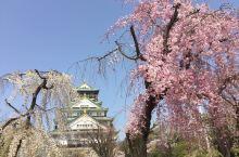 大阪城,樱花季,赏花的人纷至沓来。风过处,花瓣落,飘落的樱翻飞如雨。
